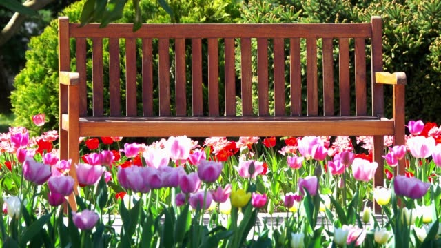 wooden bench in spring - садовая скамья стоковые видео и кадры b-roll
