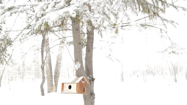 trä birdhouse på stammen av en grantree, vård för ekorrar och vilda fåglar - lucia bildbanksvideor och videomaterial från bakom kulisserna