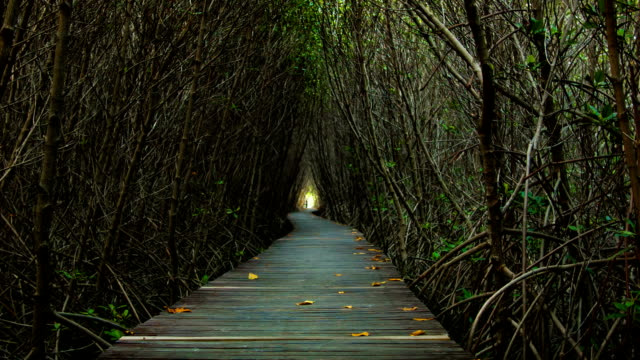 Wooden Bridge In Mangrove Forest. video
