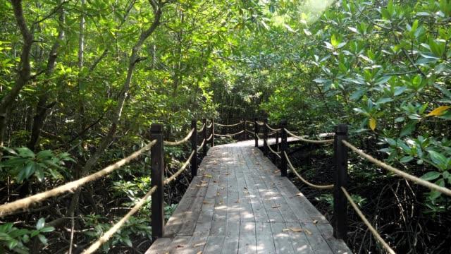 Wooden bridge in the mangroves. Sun rays