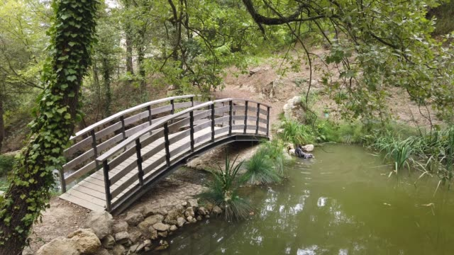 Wooden Bridge With Dog Bathing In The Pond