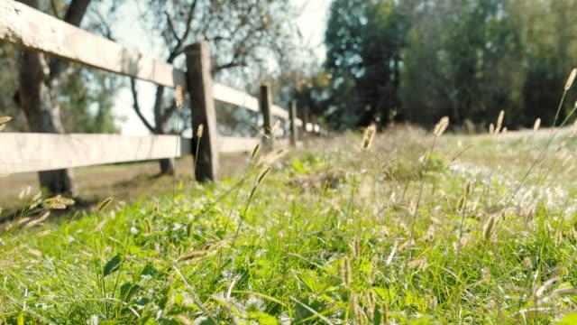 vídeos de stock e filmes b-roll de slo mo wooden fence enclosing a pasture - rancho quinta