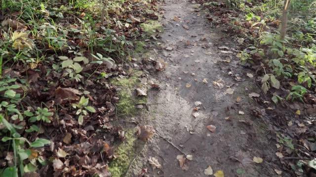 Wooden footbridge over mud
