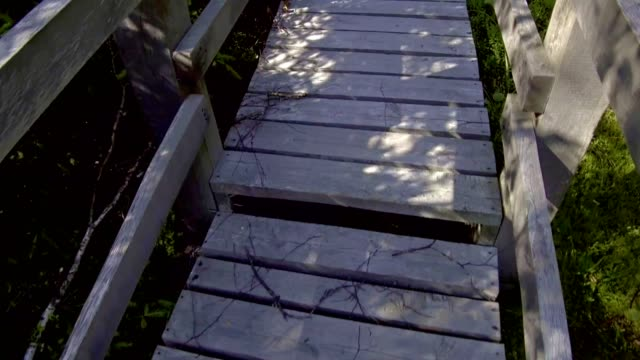 wooden footbridge through the swamp