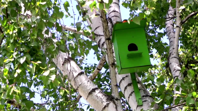 Wooden green birdhouse hangs on a birch tree at summer day in city park. video