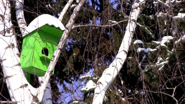 Wooden green birdhouse hangs on a birch tree at winter day in city park. video
