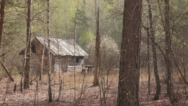 wooden house in the forest, long shot - cacciatore video stock e b–roll