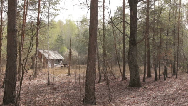 wooden house in the forest, wide shot - capanna video stock e b–roll