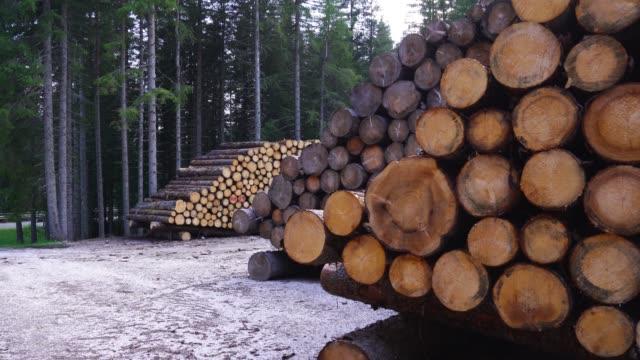 stockvideo's en b-roll-footage met houten logboeken in stapels die in het hout worden gesorteerd - boomstam
