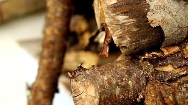 çam ahşap günlükleri - şömine odunu stok videoları ve detay görüntü çekimi