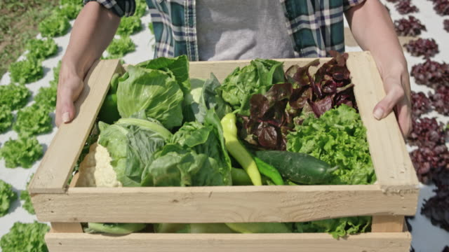 Wooden vegetable crate being carried in the sunny field by a farmer video