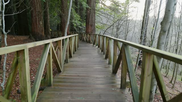 Wooden walkway at forest