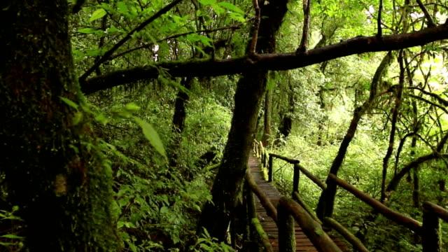 wooden walkway through in deep rainforest; dolly shot video