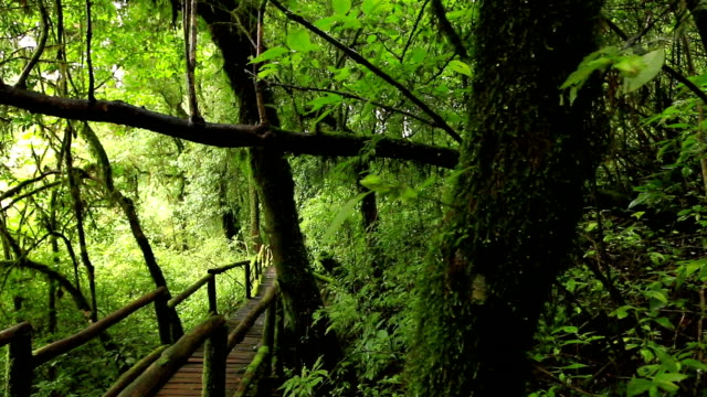 wooden walkway through in deep rainforest,dolly shot video