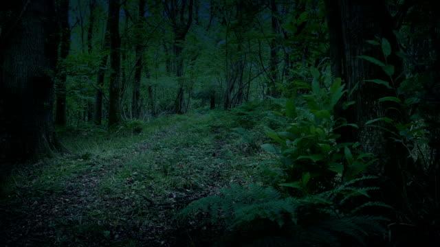 skogs mark i skymningen moving shot - liten skog bildbanksvideor och videomaterial från bakom kulisserna