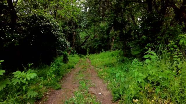 vídeos de stock, filmes e b-roll de paisagens misteriosas da floresta-movendo-se entre árvores na floresta do verão - sem cultivo