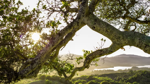 Woodland Sunset - Time Lapse video