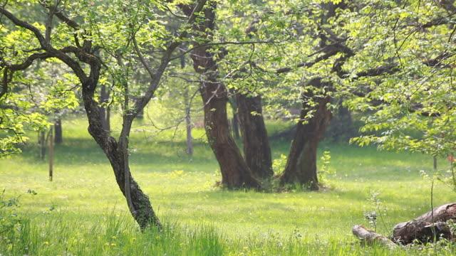 Woods in Spring, HD Video video