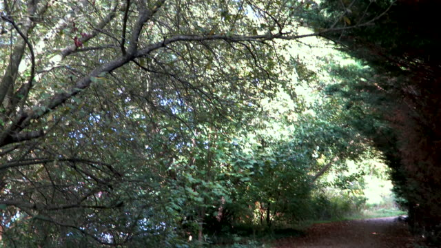 Woods with footpath