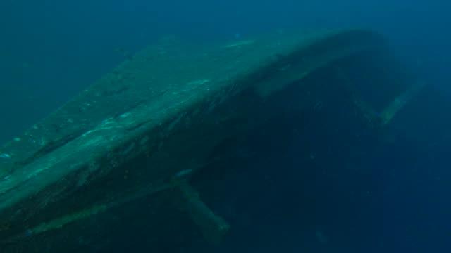 woody wreck undersea - кораблекрушение стоковые видео и кадры b-roll