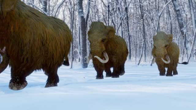 Woolly Mammoth Herd Walking In Snowy Forest Animation A 3D animation of a herd of Woolly Mammoths walking through a snowy wooded area during the Ice Age. mammal stock videos & royalty-free footage