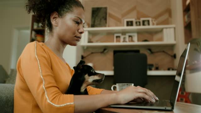 lavorare a casa - animale domestico video stock e b–roll