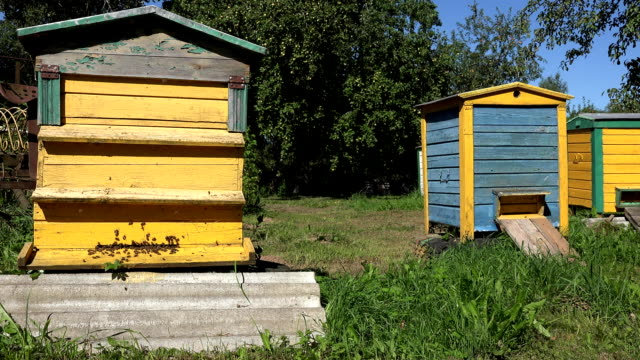 Worker bees flying to colorful hives houses in summer fruit apple tree garden. FullHD video