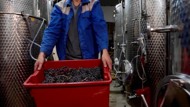 arbetstagare bära en box med druva på vingården produktion room - wine box bildbanksvideor och videomaterial från bakom kulisserna