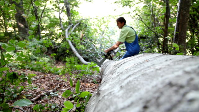 worker in the forest cutting beech log with chainsaw video