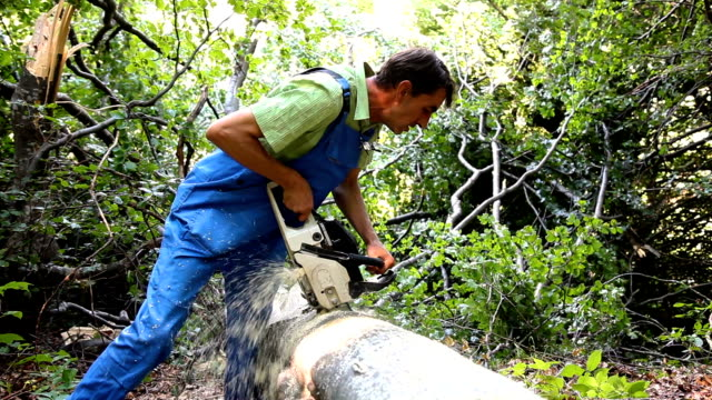 worker in the forest cutting with chainsaw video