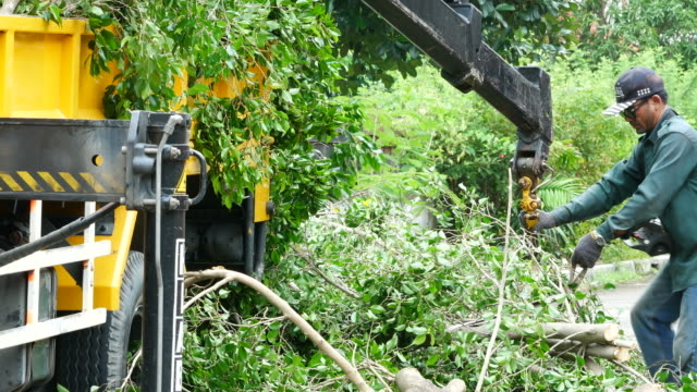 worker keep some branch after cutting video