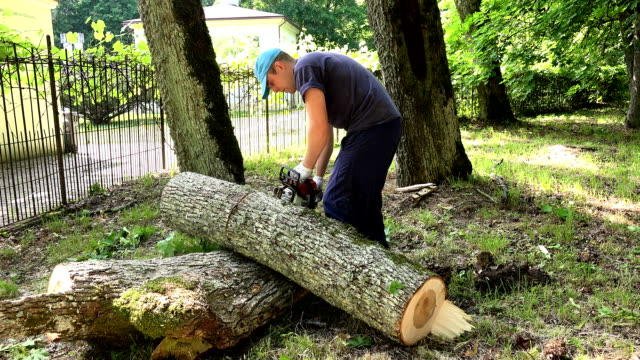 Worker man sawing tree trunk into pieces with chainsaw. video