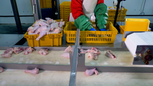 A worker packs chicken legs near a moving conveyor line. video
