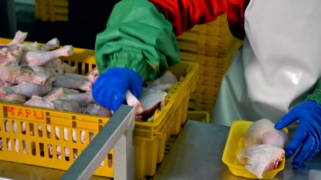 A worker places two chicken legs in one container. video