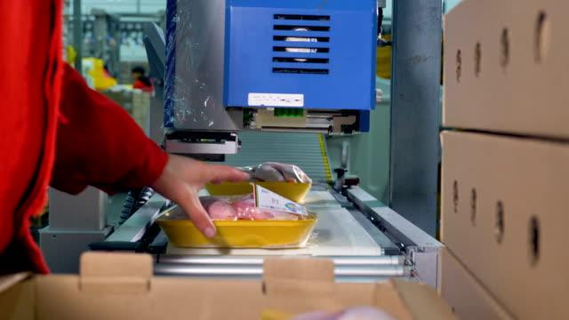 en arbetstagare får redo brickor med kycklingkött för transport. - livsmedelstillverkningsfabrik bildbanksvideor och videomaterial från bakom kulisserna