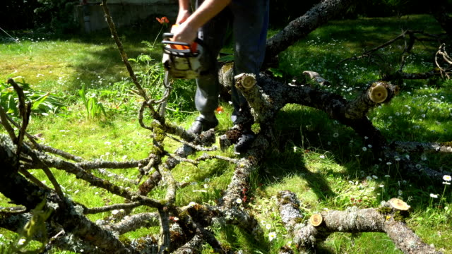 worker sawing fallen tree branch with chainsaw. Cleaning garden. Gimbal movement