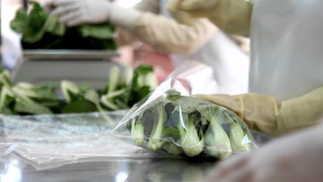 vídeos y material grabado en eventos de stock de los trabajadores en el embalaje de huerto orgánico cosechan repollo chino en venta - pak choy