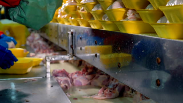 Workers stack yellow trays with chicken breasts. video