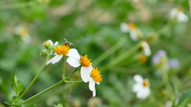 working bee on the flower. - ape operaia video stock e b–roll