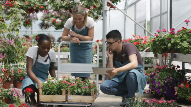 Working in a garden center Cheerful young gardeners working in a greenhouse horticulture stock videos & royalty-free footage