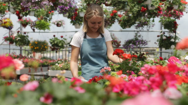 Working in a garden center Cheerful young woman,gardener, working in a greenhouse plant nursery stock videos & royalty-free footage