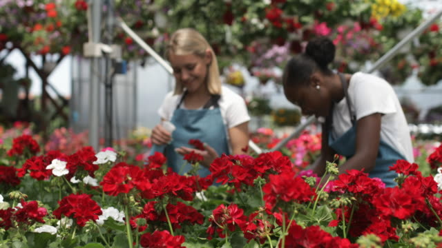 Working in a garden center Cheerful young gardeners working in a greenhouse plant nursery stock videos & royalty-free footage