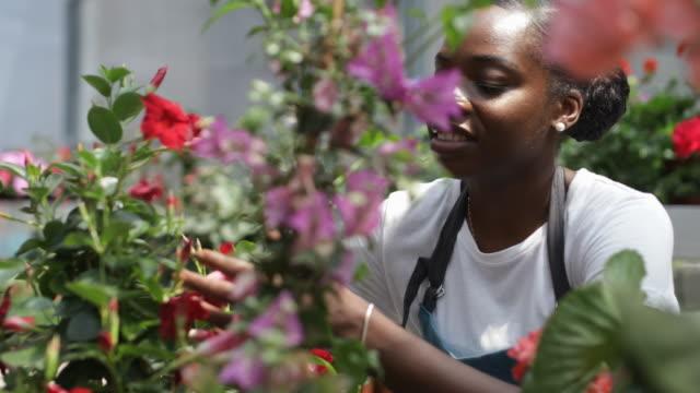 bahçe merkezinde çalışma - bahçe ekipmanları stok videoları ve detay görüntü çekimi