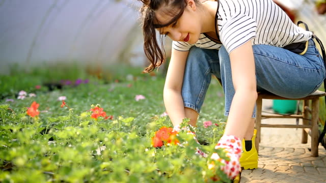 Working in greenhouse Young cute woman working in flowers greenhouse, preparing plants for sale horticulture stock videos & royalty-free footage