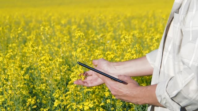 working in nature. - canola video stock e b–roll