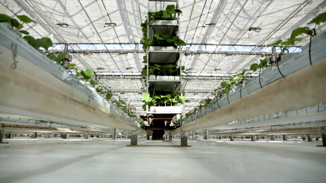 Working in the greenhouse roll cart with green plants on the camera. video