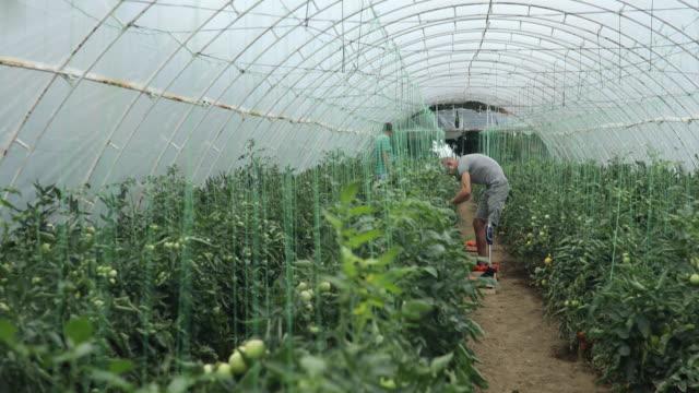 Working on farm video