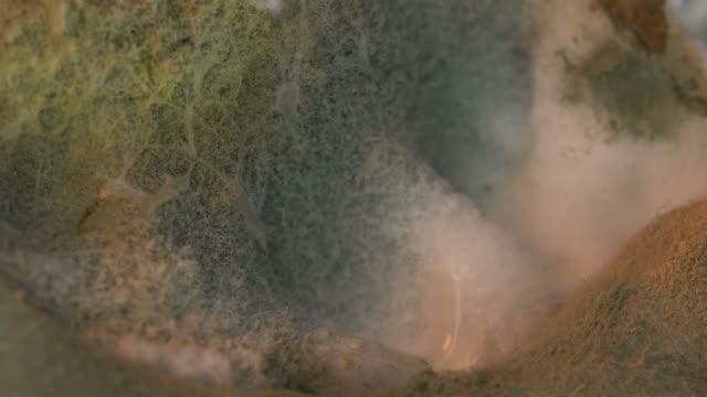 金型の世界 - 腐敗点の映像素材/bロール