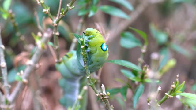Worm crawling on a leaf Worm crawling on a leaf arthropod stock videos & royalty-free footage