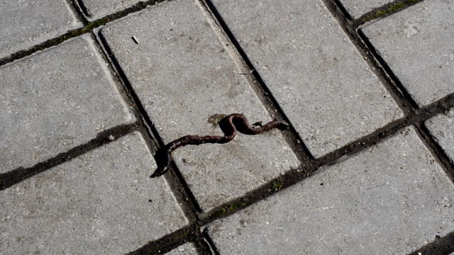 Worm on a tile video